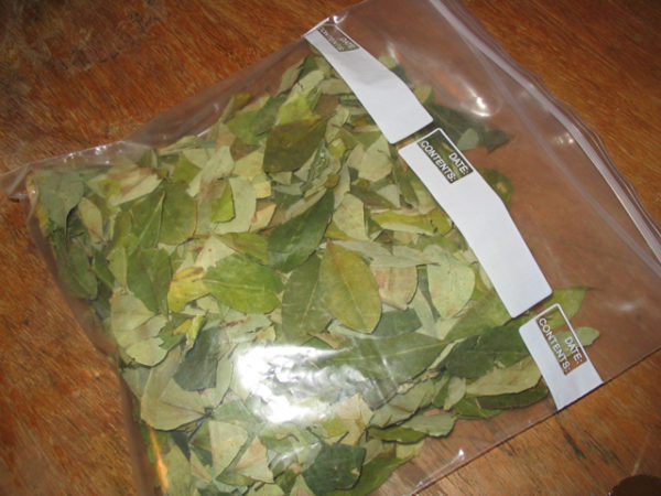 Coca leaves for sale online